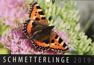 Schmetterlinge 2019