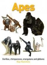 Apes: Gorillas, Chimpanzees, Orangutans and Gibbons