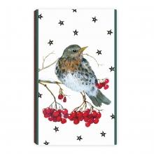 , Kerstlucifers vogel