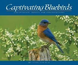 Tekiela, Stan Captivating Bluebirds