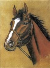 Dover Horse Notebook