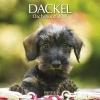 ,Dackel 2018. Broschürenkalender