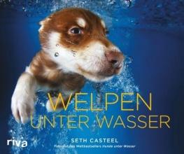 Casteel, Seth Welpen unter Wasser