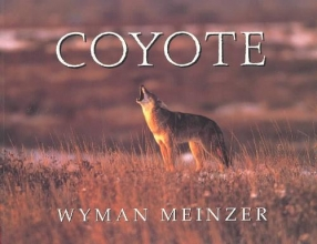 Wyman Meinzer Coyote
