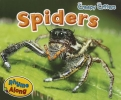 Smith, Sian,Spiders