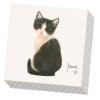 , Servetten francien katten