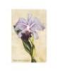 , Bot, Brazilian Orchid, Mini, Unl