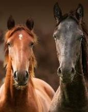 Magic Horses Blankbook
