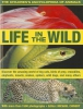 Chinery, Michael,Children`s Encyclopedia of Animals: Life in the Wild