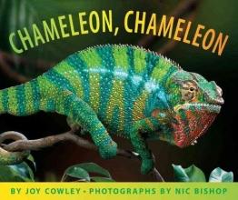 Cowley, Joy Chameleon, Chameleon