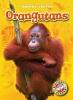 Borgert-spaniol, Megan,Orangutans