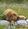 ,Sweet Dreams 2018 Postkartenkalender