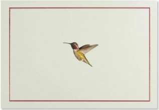 Hummingbird Flight Note Cards
