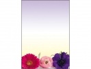 <b>designpapier Sigel A4 90grs Flower Harmony pak 50 vel</b>,