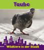 Isabel  Thomas ,Taube, Wildtiere in der stadt