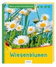 Ernsten, Svenja Wiesenblumen
