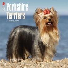 Browntrout Publishers, Inc Yorkshire Terriers 2017 Square