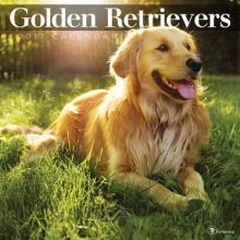 Golden Retrievers 2017 Calendar