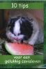 ,10 Tips voor een gelukkig cavialeven