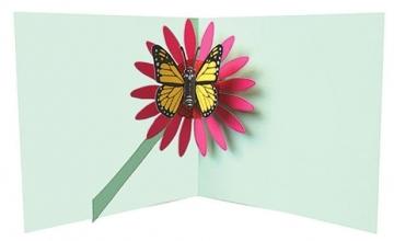 2totango Butterfly on Flower