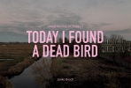 Janko  Bosch,Today I found a dead bird