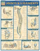 Perez, Vincent Joints & Ligaments