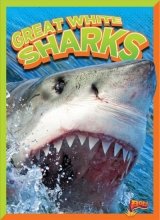 Clausen-Grace, Nicki Great White Sharks