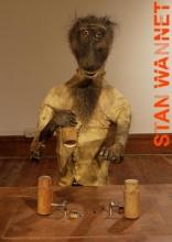 Stan  Wannet, Cornel  Bierens Rational animal