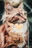 <b>Anneleen  Bru</b>,I love Happy Cats Revolutie