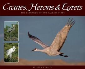 Tekiela, Stan Cranes, Herons & Egrets