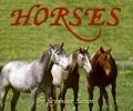 Simon, Seymour,Horses