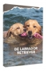 <b>Cindy  Schwering</b>,De Labrador Retriever
