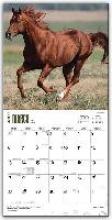 Quarter Horses 2016 Calendar