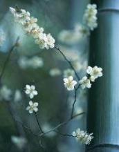 Zen Blossoms Blankbook