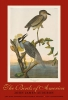 Audubon, John James,The Birds of America - The Bien Choromolithographic Edition
