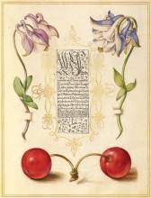 Mira Calligraphiae Monumenta Portfolio Note