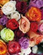 Roses Blankbook