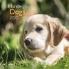 ,<b>Kalender 2020 teNeues Dogs A&I int 30x30cm</b>