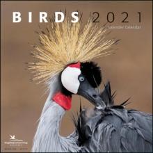 , Birds maandkalender 2021, Vogelbescherming