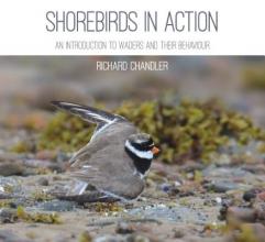 Richard Chandler Shorebirds in Action