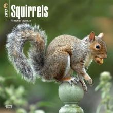 Squirrels 2017 Calendar