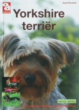 A. Koster , Yorkshire terrier