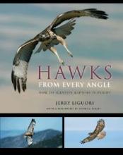 Jerry Liguori Hawks from Every Angle