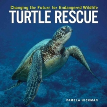 Hickman, Pamela Turtle Rescue