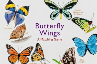 , Butterfly Wings