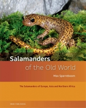 Max  Sparreboom Salamanders of the old world