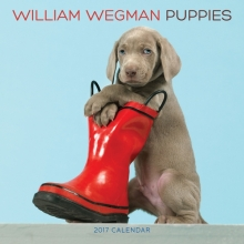 Wegman, William William Wegman Puppies