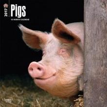 Pigs 2017 Calendar