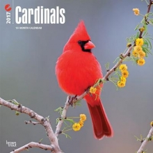 Cardinals 2017 Calendar