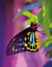 Butterfly Blankbook